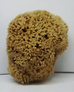 Extra Quality Sea Sponge-large
