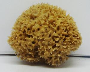 Extra Quality Sea Sponge-small